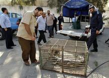 """<p>A l'extérieur d'un commissariat du nord de la bande de Gaza. """"Rock"""", un crocodile de près de deux mètres de long qui avait faussé compagnie il y a 18 mois à un zoo de la bande de Gaza, a été capturé sain et sauf. /Photo prise le 6 novembre 2012/REUTERS/Ahmed Zakot</p>"""