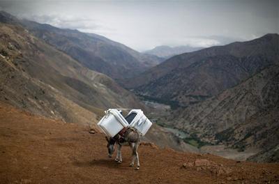A donkey's burden