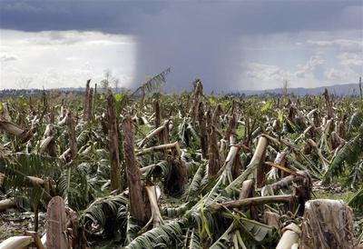 Typhoon Bopha aftermath