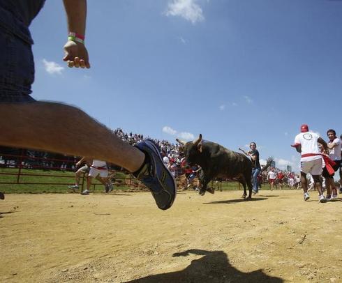 The Great Bull Run