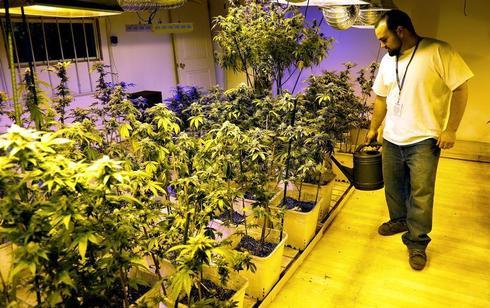 Marijuana for sale in Colorado