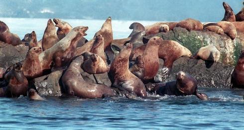 25 years after Exxon Valdez