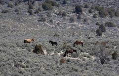 Part of a band of wild horses graze in the Nephi Wash area outside Enterprise, Utah, April 10, 2014. REUTERS/Jim Urquhart