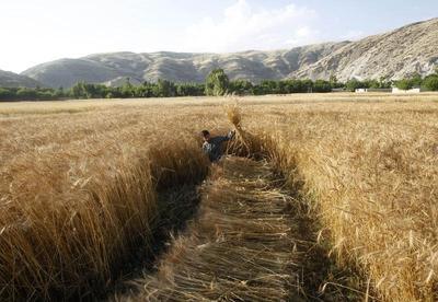 Farming a war-torn land