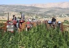 Lebanese security forces drive a tractor as they help workers uproot cannabis plants in Yammouneh village in Baalbek September 18, 2012. REUTERS/Ahmed Shalha