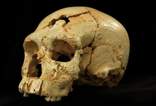 An undated picture shows Skull 17 from the Sima de los Huesos site in Sierra de Atapuerca, Spain.   REUTERS/Copyright Javier Trueba/Madrid Scientific Films/Handout via Reuters