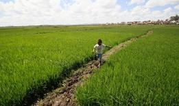 Plantação de arroz nos arredores de Antananarivo, capital de Madagascar. 30/10/2014 REUTERS/Thomas Mukoya