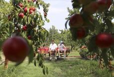 L'Union européenne annonce le déblocage de 125 millions d'euros pour soutenir les producteurs européens de fruits et légumes qui font face à l'embargo russe sur la plupart des importations de biens alimentaires occidentaux. /Photo d'archives/REUTERS/Alessandro Bianchi