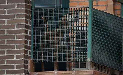 Ebola patient's dog euthanized