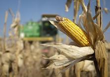 Una cosechadora recoge maíz en un campo cerca de la villa de Moskovskoye, en el sur de Rusia. Imagen de archivo, 14 octubre, 2014.  El Consejo Internacional de Cereales (CIC) elevó el jueves su pronóstico para la cosecha mundial de maíz en el 2014/15, reflejando una revisión al alza en la producción en China.  REUTERS/Eduard Korniyenko