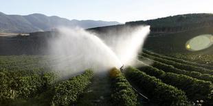 Plantação de café em Santo Antônio do Jardim, em São Paulo. 07/02/2014 REUTERS/Paulo Whitaker
