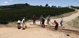 Trabalhadores instalam sistema de irrigação em plantação de café  6/02/2014.  REUTERS/Paulo Whitaker