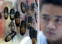 Мадагаскарские шипящие тараканы в больнице Бангкока 23 мая 2003 года. Зоопарк Сан-Франциско дал обманутым и покинутым влюбленным неожиданный повод отпраздновать День Святого Валентина - шанс взять опеку над гигантским скорпионом или шипящим тараканом, который будет назван в честь растоптавшего ваше сердце бывшего или бывшей. Sukree Sukplang / Reuters