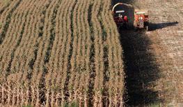 Imagen que muestra la recolección de las cosechas de maíz en Santo Antonio do Jardim, Brasil. 6 de febrero, 2014. La producción de maíz de Brasil sería presionada este año por un clima poco favorable para las cosechas, mientras que los altos costos de los fertilizantes en la atribulada Ucrania reducirán el rendimiento de los cultivos en ese país, dijo el miércoles un importante analista agrícola.  REUTERS/Paulo Whitaker