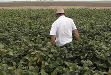 Trabalhador anda em meio a plantação de soja na cidade de Primavera do Leste. 07/02/2013 REUTERS/Paulo Whitaker