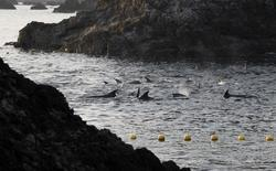 Dolphins are seen at a cove in Taiji, western Japan, January 21, 2014.  REUTERS/Adrian Mylne