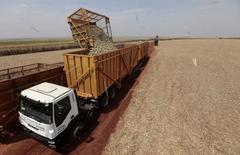 Un camión carga caña de azúcar en Valparaíso, Brasil, sep 18 2014. La producción de la principal región azucarera de Brasil será de 31,80 millones de toneladas en el periodo 2015/2016, menos que los 31,99 millones de la temporada anterior, dijo el jueves el grupo Unica en su primera proyección para los nuevos cultivos de caña.    REUTERS/Paulo Whitaker
