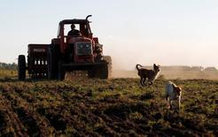 Un granjero cosechando sorgo en Estación Islas, Argentina, nov 24 2012. La cosecha de sorgo de Argentina crecería hasta un 23 por ciento en la campaña 2015/16, a 4 millones de toneladas, luego de que China, el principal importador mundial del grano, autorizó las compras de los granos del país austral, dijeron analistas. REUTERS/Enrique Marcarian
