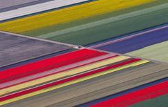 An aerial view of flower fields is seen near the Keukenhof park, also known as the Garden of Europe, in Lisse ,The Netherlands April 15, 2015. Экспорт из Нидерландов в Россию упал почти на 40 процентов по сравнению с прошлым годом на фоне ухудшения отношений двух стран вслед за падением на воюющем востоке Украины в июле 2014 года авиалайнера, на борту которого было много голландцев. REUTERS/Yves Herman