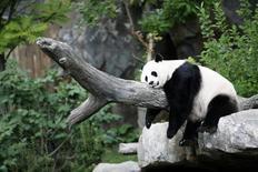 Foto de arquivo da panda gigante Mei Xiang em Washington.  23/8/2007.  REUTERS/Kevin Lamarque