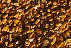 Granos de maíz  de la compañía DeLong en Minooka, EEUU, sep 24 2014. Las cosechas de maíz y soja de Estados Unidos superarán las expectativas este año porque los altos rendimientos en áreas al oeste del río Misisipi compensarán los problemas causados por el exceso de lluvia en los estados orientales, dijo el miércoles el Departamento de Agricultura (USDA por sus iniciales en inglés).   REUTERS/Jim Young