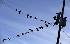 Unas palomas descanzando en un poste eléctrico en Chilpancingo, México, oct 25 2014. México planea lanzar en septiembre un nuevo instrumento de inversión con beneficios fiscales que buscará atraer capitales hacia el vital sector energético de la segunda economía de América Latina, dijeron a Reuters cuatro fuentes familiarizadas con el tema.    REUTERS/Henry Romero