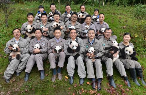 Breeding China's pandas