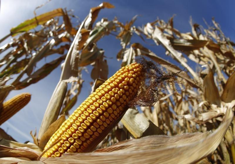 Harvest Natural Resources Lawsuit