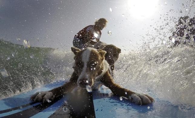2月19日、オーストラリアのドッグトレーナーで、元サーフィンチャンピオンのクリス・アボイティスさん(写真)は、犬との健全な関係の築き方を飼い主に教えるのに、サーフィンの規律を使っている。シドニーのパームビーチで18日撮影(2016年 ロイター/Jason Reed)