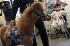Handler Jorge Garcia-Bengochea holds Honor, a miniature therapy horse from Gentle Carousel Miniature Therapy Horses, as they visit with patients at the Kravis Children's Hospital at Mount Sinai in the Manhattan borough of New York City, March 16, 2016. REUTERS/Mike Segar