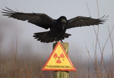 Ворон над предупреждающим знаком в зоне отчуждения вокруг Чернобыльской АЭС. 23 декабря 2009 года. Именно в тот момент, когда страхи ядерного терроризма растут, инициатива президента США обезопасить незащищенные атомные материалы по всему миру, похоже, теряет импульс и рискует еще сильнее застопориться. REUTERS/Vasily Fedosenko