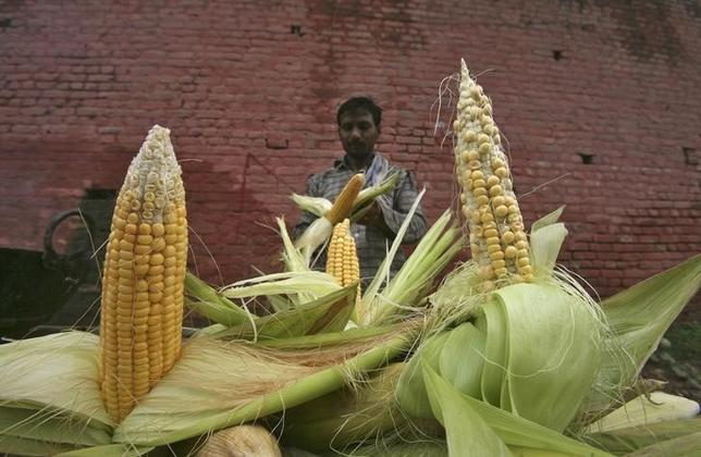 India plans to import 500,000 tonnes of corn to overcome shortage