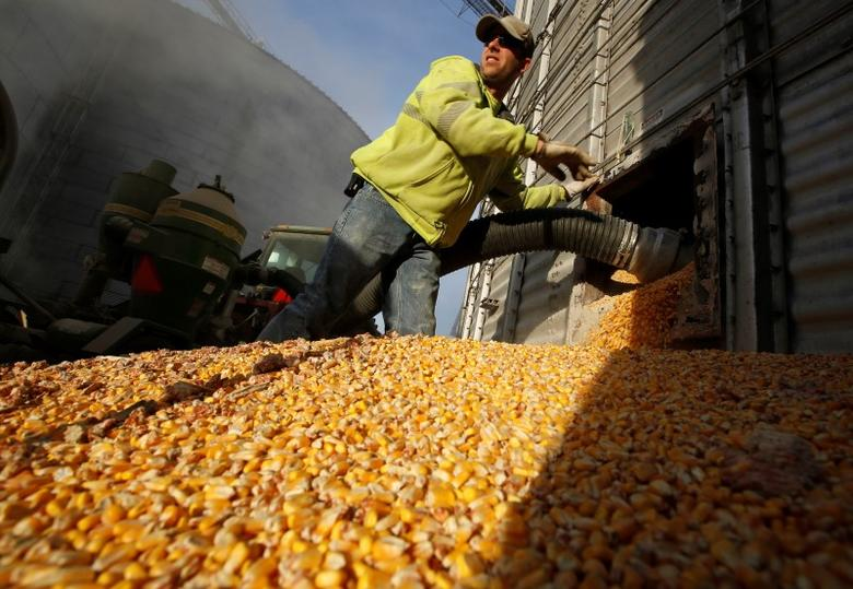 A worker empties corn kernels from a grain bin at DeLong Company in Minooka, Illinois, September 24, 2014. REUTERS/Jim Young