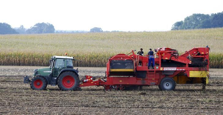 Migrants Filmon Abraham, 17, from Eritrea and Sardawalli Zadran, 17, (R) from Afghanistan help to harvest potatoes during a  training in Grunertshofen near Fuerstenfeldbruck, Germany September 22, 2015. REUTERS/Michaela Rehle