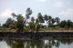An oil slick clots the bottom of mangroves in Bodo creek in Ogoniland, near Nigeria's oil hub city of Port Harcourt December 4, 2012. REUTERS/Akintunde Akinleye/File Photo