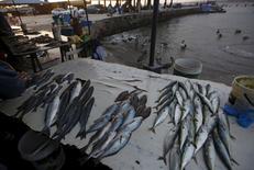 Pescados a la venta en la playa Pescadores en el distrito limeño de Chorrillos, oct 27, 2015. La economía de Perú habría recuperado el ritmo y crecido un 4,0 por ciento interanual en julio por el continuo avance del clave sector minero y un repunte de la pesca, aunque el rubro de la construcción anotó su mayor caída de este año.  REUTERS/Mariana Bazo