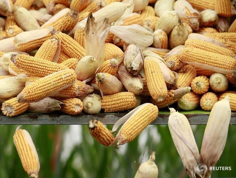 2015年9月30日,河北省一处农田里的收割机向卡车内倾倒收获的玉米。REUTERS/Kim Kyung-Hoon/File Photo