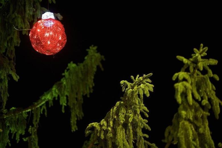 A single red bulb decorates a scraggly Christmas tree following a ceremony in Reading, Pennsylvania with on December 7, 2014.   REUTERS/Mark Makela