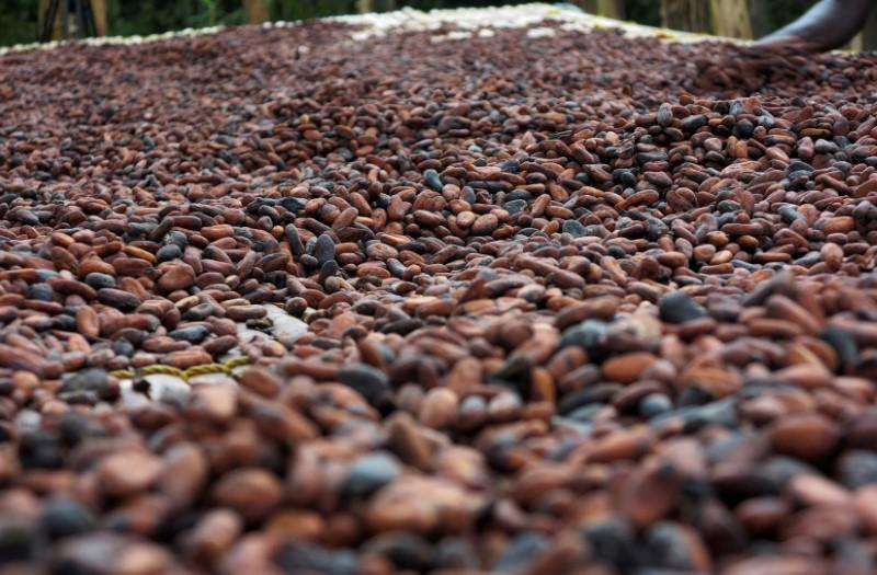 Incoming Ghana government gives cocoa sector chance of fresh