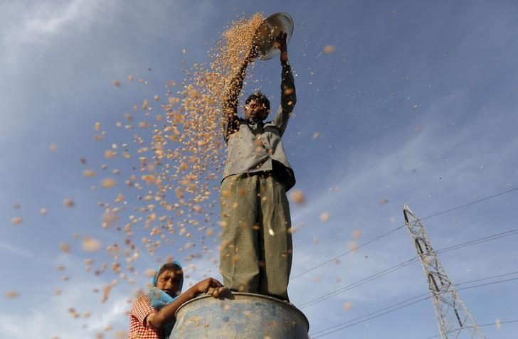 A farmer standing on a plastic drum winnows wheat in a field on the outskirts of Ahmedabad, March 29, 2016. REUTERS/Amit Dave/File Photo