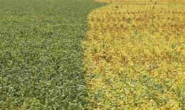 Em foto de arquivo, plantação de soja em Primavera do Leste, Mato Grosso, Brasil 07/02/2013 REUTERS/Paulo Whitaker