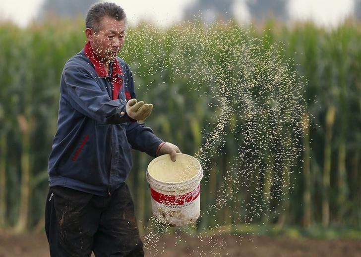 A farmer plants seeds in a corn field at a farm in Gaocheng, Hebei province, China, September 30, 2015. REUTERS/Kim Kyung-Hoon/Files