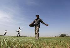 Фермеры разбрасывают удобрения на пшеничном поле близ Ахмедабада. 15 декабря 2015 года. Баланс на мировом рынке удобрений может восстановиться, так как неэффективные китайские производители, наводнившие рынок дешёвым сырьем в последние несколько лет, закрываются, сказал в интервью Рейтер глава российской агрохимической группы Фосагро. REUTERS/Amit Dave