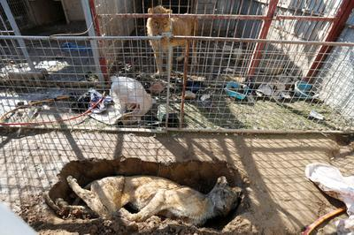 Animals starve in Mosul's decimated zoo