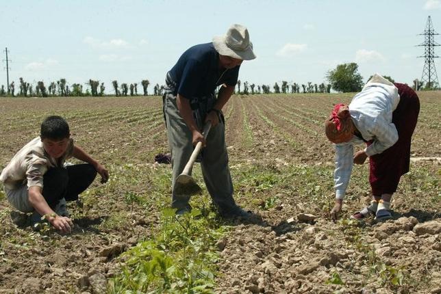 2月9日、ウズベキスタン政府が、200万世帯の農家にニワトリとレモンの苗木を支給する計画を打ち出していることが明らかになった。農家を支援すると同時に、卵やレモンは買い上げて輸出するという。写真は2005年撮影(2017年 ロイター/Maria Golovnina )