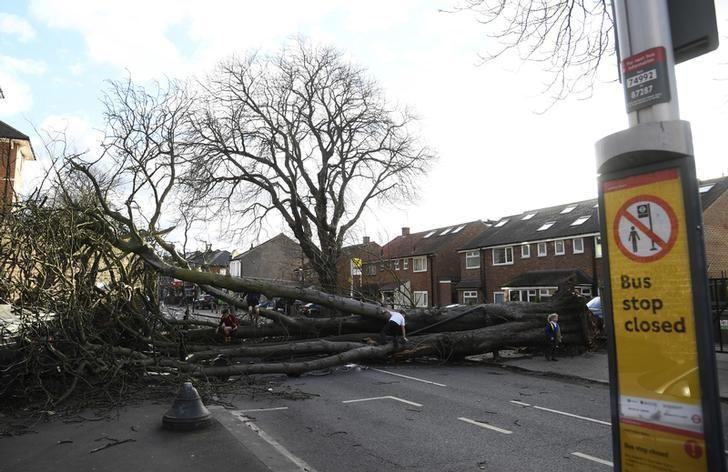 A fallen tree brought down by high winds from Storm Doris lies across a main road in Isleworth in London, Britain, February 23, 2017. REUTERS/Toby Melville