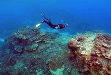 """Partes de la Gran Barrera de Coral australiana nunca se recuperarán del impacto de las aguas anormalmente templadas, dijeron científicos, en momentos en que más secciones del sitio Patrimonio de la Humanidad están bajo una renovada amenaza debido a un reciente aumento en la temperatura del mar. En la imagen, un hombre practica snorkels en el área llamada """"Los jarndines de coral"""" cerca de la isla de Lady Elliot en Australia, el 11 de junio de 2015. REUTERS/David Gray/File Photo"""