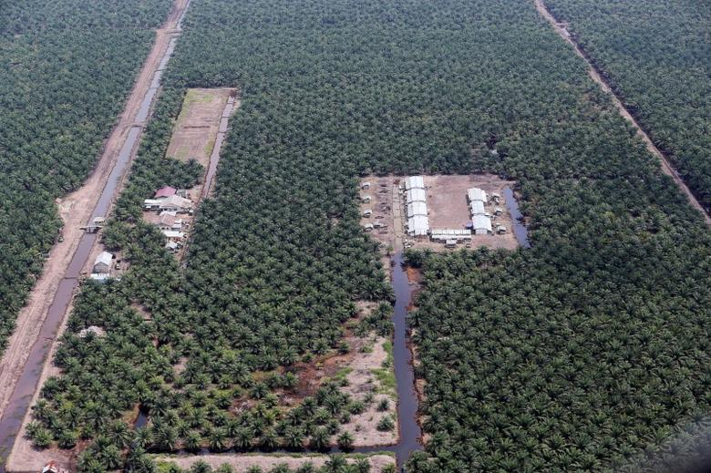 An aerial view of an oil palm plantation in Musi Banyuasin Regency, South Sumatra, Indonesia, August 2, 2016, in this photo taken by Antara Foto. Picture taken August 2, 2016. Antara Foto/Nova Wahyudi/
