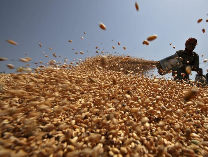 FILE PHOTO - A worker spreads wheat crop for drying at a wholesale grain market in Chandigarh, India, April 22, 2015. REUTERS/Ajay Verma