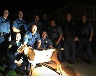 St. Paul Police Department pose with captured goat named Gordy that was stolen from Indian Mounds Park in Minnesota, U.S. on May 5, 2017. St. Paul Police Department/Handout via REUTERS